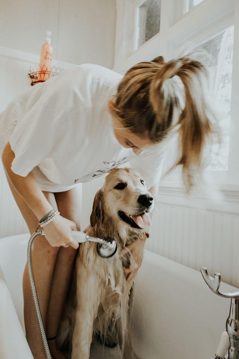 Hund som tvättas i badkar