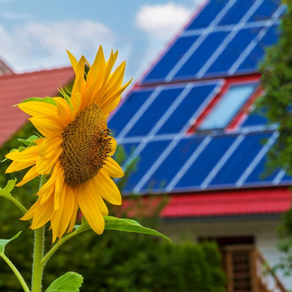 solceller på tak, en solros syns i förgrunden